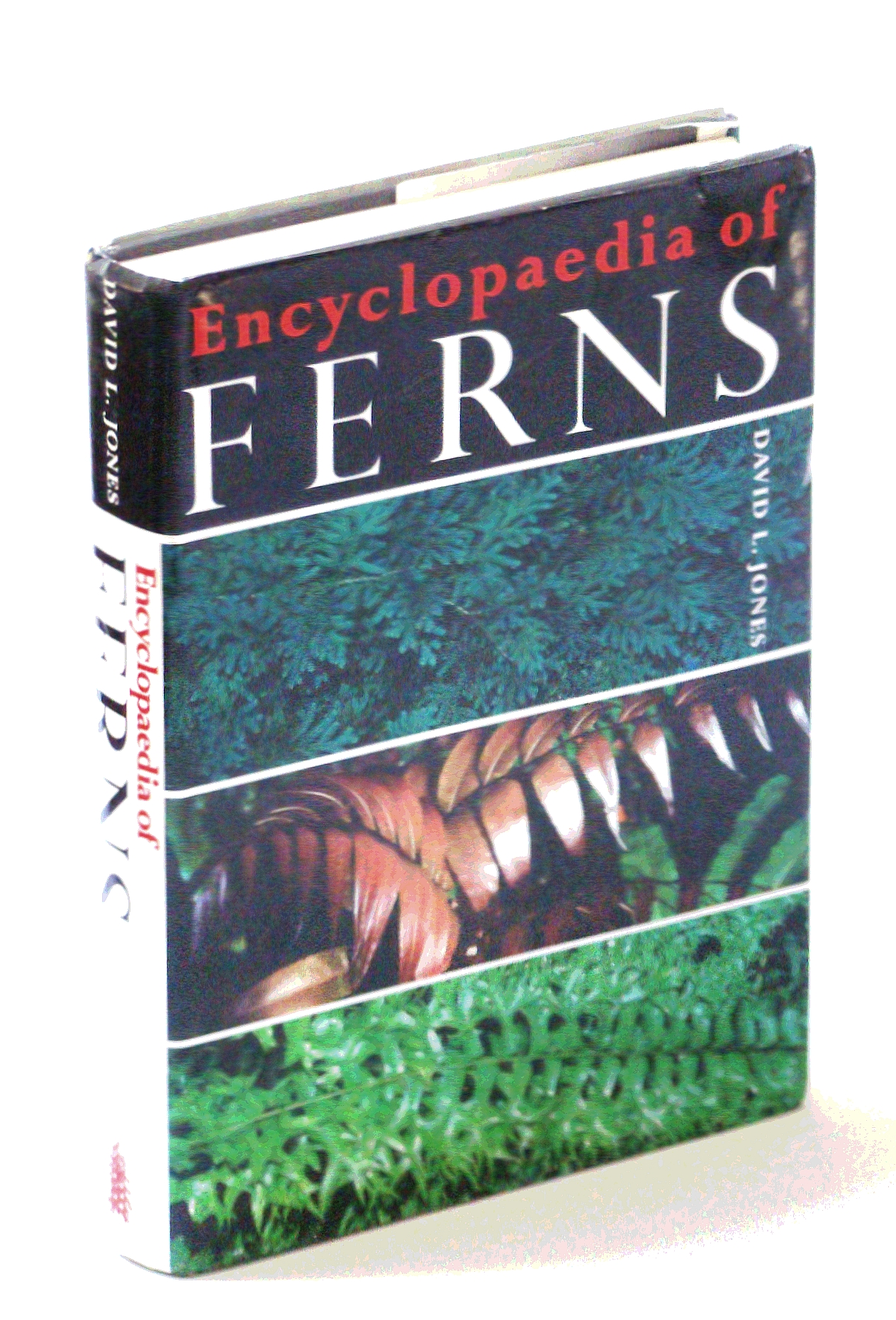 Image for Encyclopaedia of Ferns