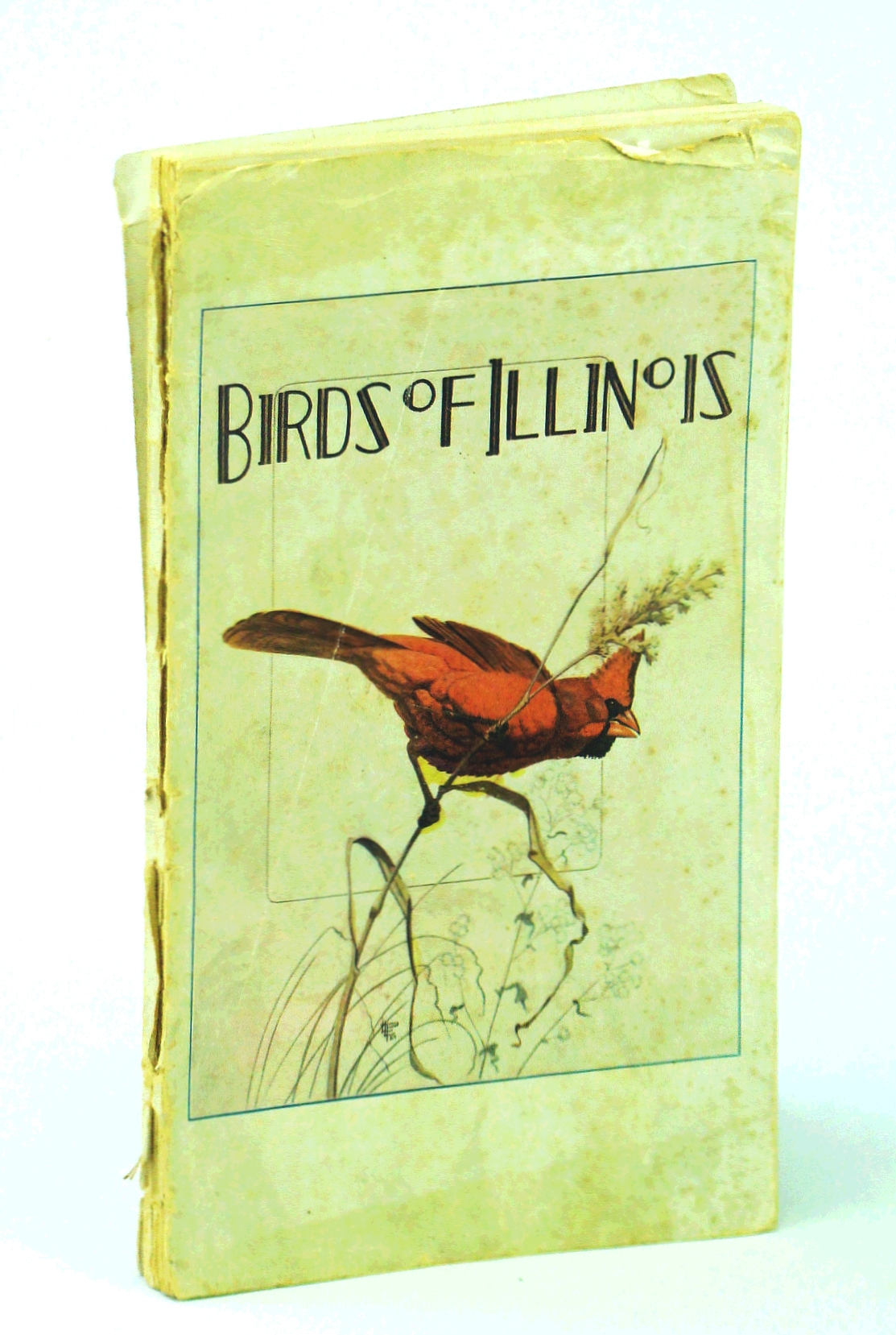 Image for Birds of Illinois (Conservation publication)