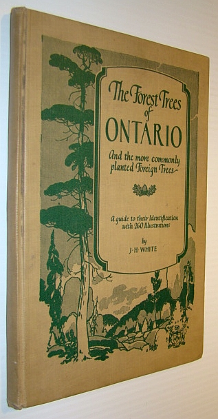 Image for The Forest Trees of Ontario - and the More Commonly Planted Foreign Trees: A Guide to Their Identification with 260 Illustrations